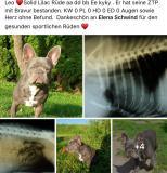 frenchbulldogge-19