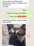 frenchbulldogge-77