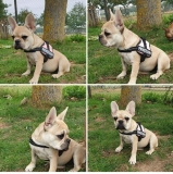 frenchbulldogge-15